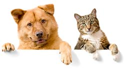 cat-dog-wall-humane-donate_Smal