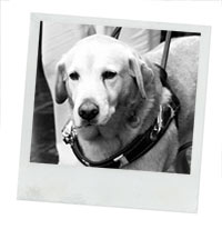 dog-leash-humane-donation-cars_Small